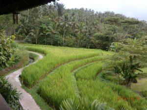Mt Batakuru Bali
